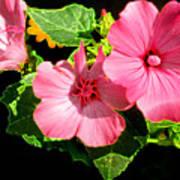 Lite Floral Art Print