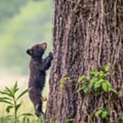 Little Bear Big Tree Art Print
