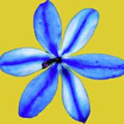 Little Blue Flower On A Yellow Background Art Print