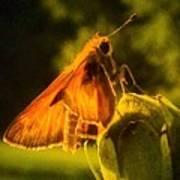 Little Brown Skipper Butterfly Art Print