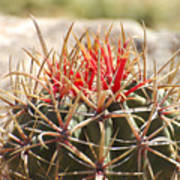 Little Cactus Art Print