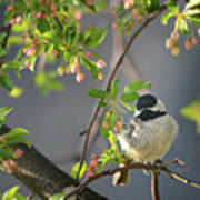 Little Chickadee In The Pink Art Print