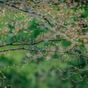 Little Diamonds In My Trees Art Print