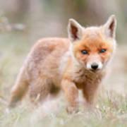 Little Fox Kit, Big World Art Print