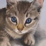 Little Kitty Art Print
