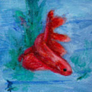 Little Red Betta Fish Art Print by Brenda Thour