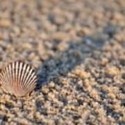 Little Seashell - Jersey Shore Art Print