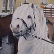 Little Stallion-glin Fair Art Print