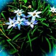 Little Star Wind Flowers Art Print