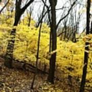 Little Yellow Trees Art Print