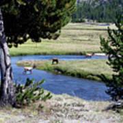 Live Dream Own Yellowstone Park Elk Herd Text Art Print