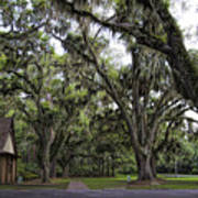 Live Oak And Spanis Moss Landscape Art Print