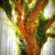 Live Oak With Cypress Beyond Art Print