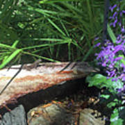 Lizards In The Garden Art Print