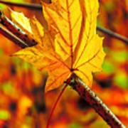 Leaving Autumn Art Print