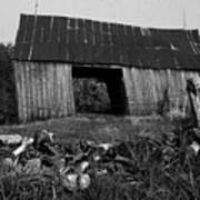 Lloyd-shanks-barn-4 Art Print