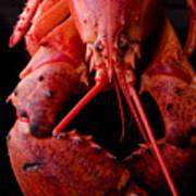 Lobster Print by Jim DeLillo