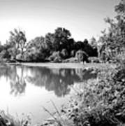 Lodi Pig Lake Reflections B And W Art Print