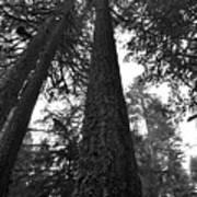 Lofty Tree Art Print