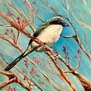 Loggerhead Shrike Art Print