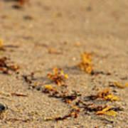 Loggerhead Turtle Hatchling Delray Beach Florida Art Print