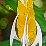 Lollipop Flower In Bourbon Resort Gardens Near Iguazu Falls National Park-brazil  Art Print