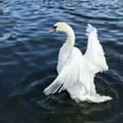 London Swan Art Print