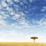 Lone Acacia Tree In The Masai Mara Art Print