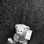 Lone Bear Art Print