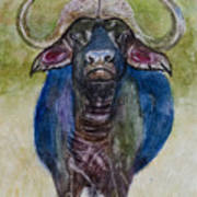 Lone Cape Buffalo Art Print