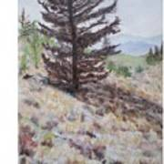 Lone Mountain Tree Art Print
