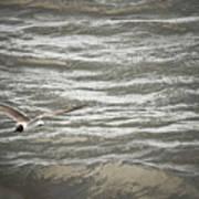 Lone Sea Gull Art Print