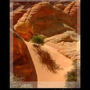 Lone Tree At Coyote Buttes Arizona Art Print