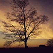 Lone Tree At Sunrise Art Print