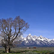 Lone Tree At Tetons Art Print