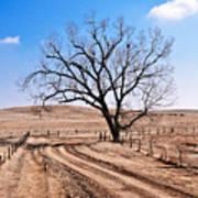 Lone Tree February 2010 Art Print