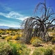 Lone Tree In Blooming Desert Art Print