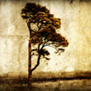 Lone Tree Art Print by Julie Hamilton
