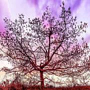 Lone Tree On The Hill Art Print