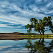 Lone Tree Pond Reflection Art Print