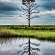 Lone Tree Reflected Art Print