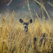 Lonely Deer In The Field Art Print