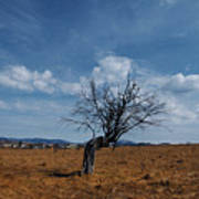 Lonely Dry Tree In A Field Art Print
