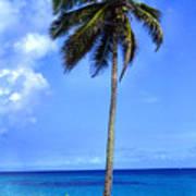 Lonely Palm Tree Los Tubos Beach Art Print