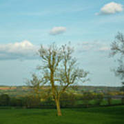 Lonely Tree Cotswold England Art Print