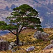 Lonesome Pine Art Print