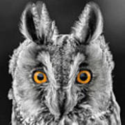 Long Eared Owl 2 Art Print