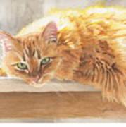 Long-hair Cat Art Print