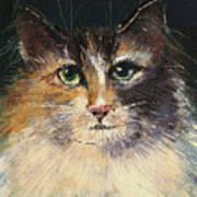 Long Haired Cat Art Print