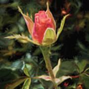 Long Stemmed Rose Art Print